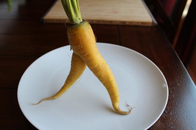 carrot pic - blog